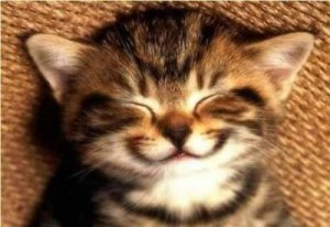 Yeah I didn't exactly know what kind of image to put with this post so here is a picture of a smiling kitten.