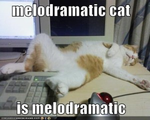 melodramatic cat